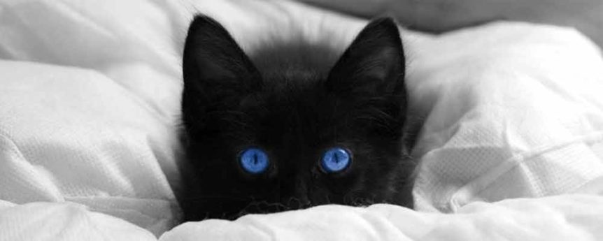 Great Creative Black Cat Names For Your Male Or Female Kitten