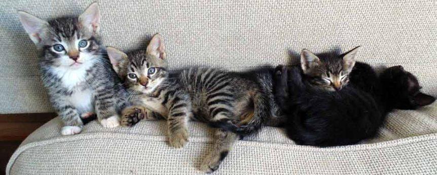 Funny kitten names