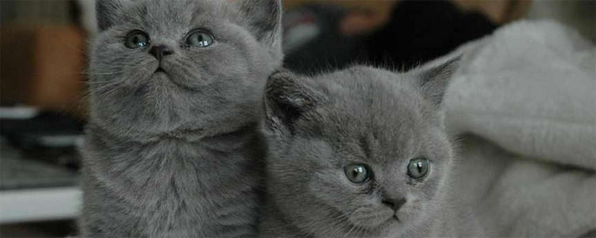 Great Creative Grey Cat Names For Your Male Or Female Kitten