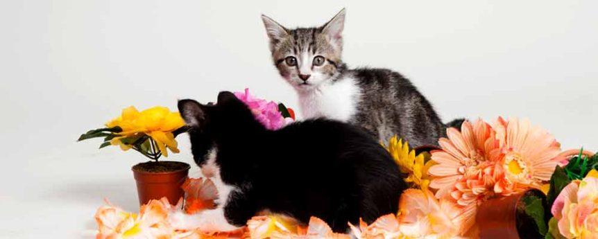 unique-kittens