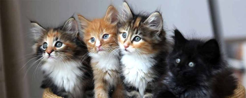 Best unisex cat names